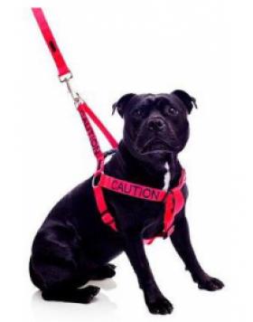 Нагръдник за кучета